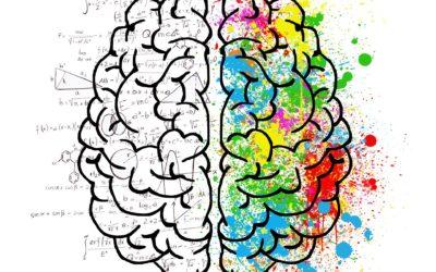 Was Du aus der Hirnforschung lernen kannst und solltest